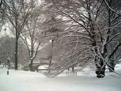 tree central park snow nyc
